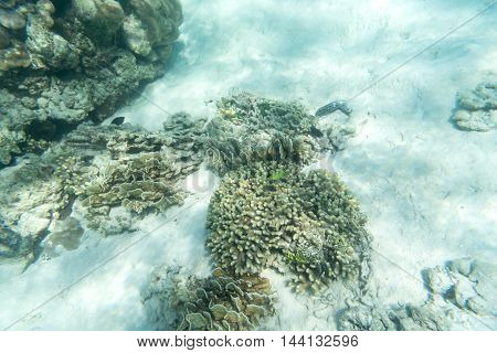 small fishes and coral underwater sea for background use