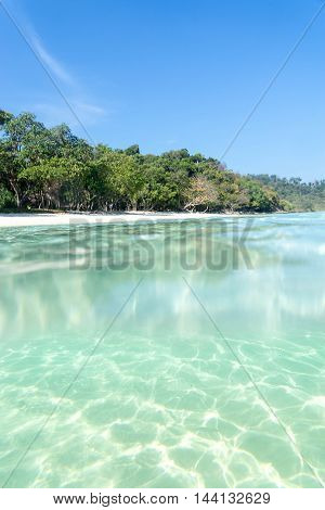 half of image between underwater and overwater tree and sky and sand light of sun