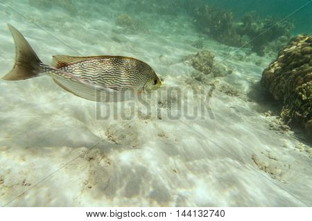 sea fish underwater and white sand life of sea