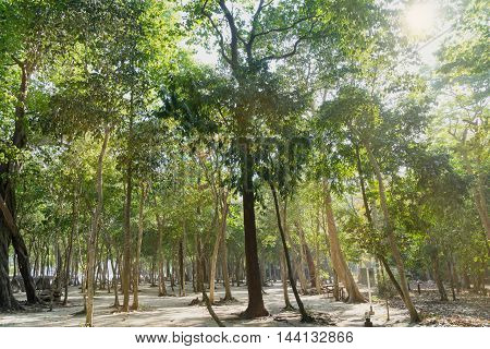 green forest on the beach and sun light