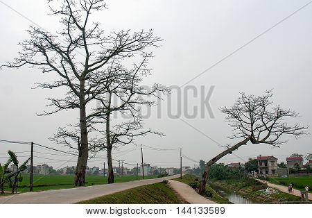 Natural beauty, ancient trees, suburban Ha Noi, Vietnam