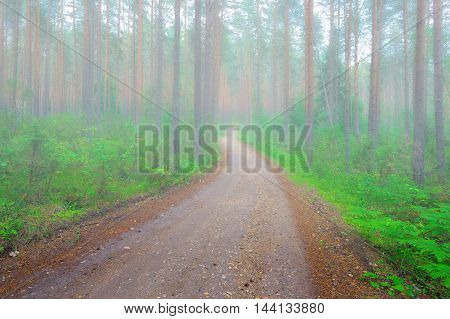 Road through the misty morning forest. Seliger, Russia.