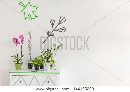 Indoor Plant Decor Idea