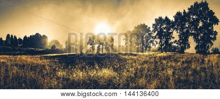 Landscape misty panorama. Fantastic dreamy sunrise  through trees. Vintage toning.
