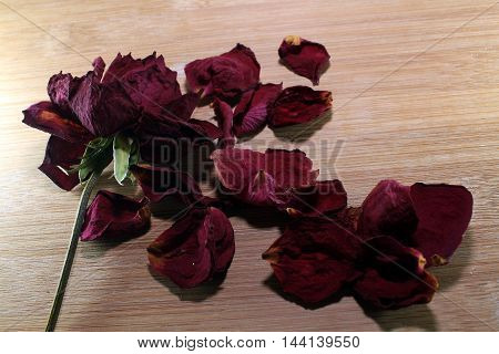 A single withered rose with a scattered sheath pod petals on a wooden texture.