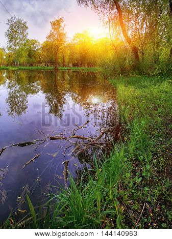 Tranquil Pond With Lush Green Woodland Park in Sunshine. Reflection of trees in water