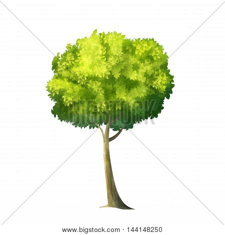 Color Vector Photo Realistic Illustration Of Big Green Tree Isolated On White