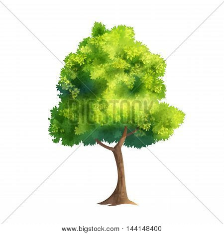 Color Vector Illustration Of Big Tree With Fresh Leaves Isolated On White