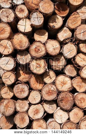 Wooden logs. Timber logging in autumn forest. Freshly cut tree logs piled up as background texture.