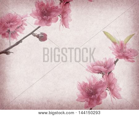peach blossom on Old antique vintage paper background