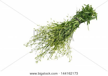 Medicinal plant Stellaria holostea (addersmeat or greater stitchwort) isolated on a white background. In herbal medicine often used topically with caution for internal use toxic