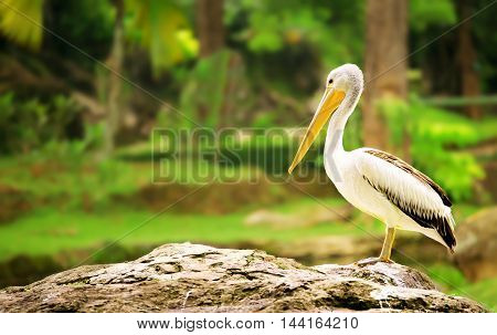 This Pelicans was captured at Mini Indonesian Park, Jakarta.