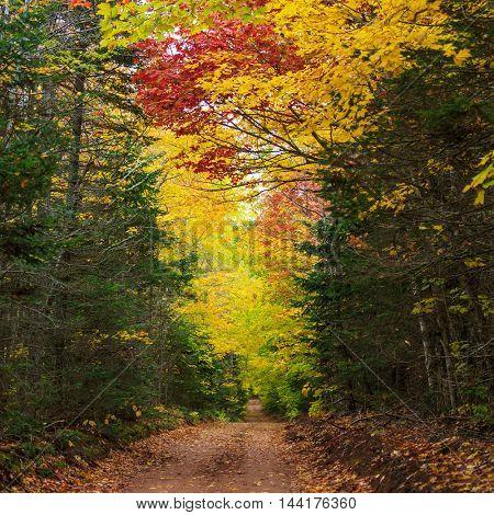 Autumn foliage on a dirt road in rural Prince Edward Island, Canada.