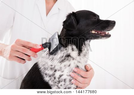 Close-up Of A Vet Grooming Dog's Hair
