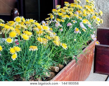 Yellow potted flowers used to decorate the cafe exterior.