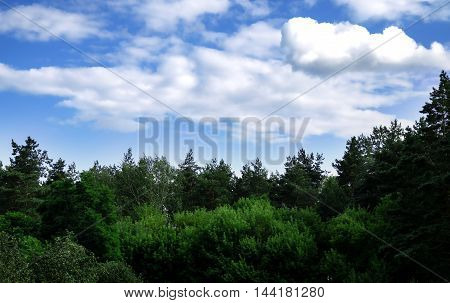 summer warm day beautiful landscape of trees against a bright blue sky with white fluffy clouds