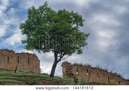 Lonely tree in front of ruins of fortress wall