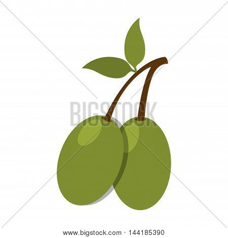 olive fruit branch leaves green nature organic vector illustration