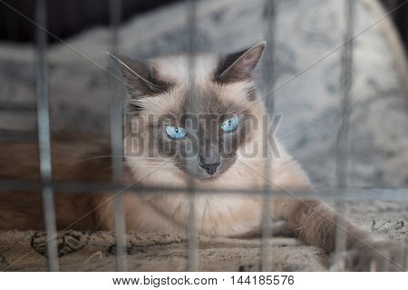 A cute white cat trapped behind bars