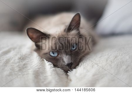 A cute white cat with very blue eyes threatens me with a grenade