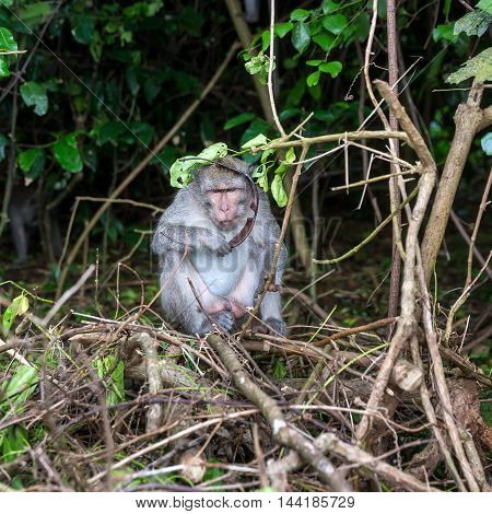Monkey Thief Stole Points From Tourist