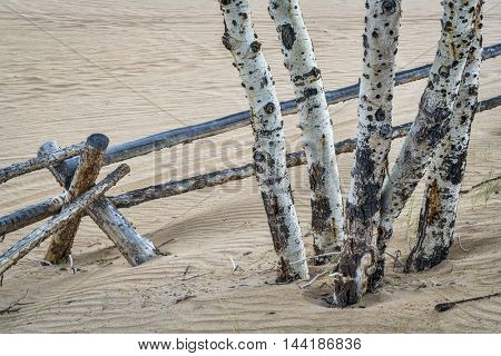 Aspen tree and  wooden fence at North Sand Hills in Colorado