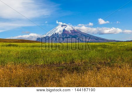 Barley cultivated fields and Cotopaxi Volcano in the background