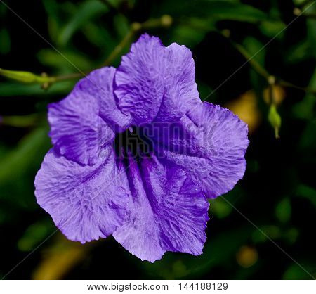 close-up photo of blooming purple flower with greenery