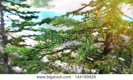 Branches of green fir-tree on blur blue lake background