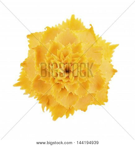 Closeup Pumpkin Carving Flower on white background