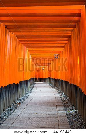 Fushimi Inari Taisha Shrine torii gates in Kyoto, Japan.