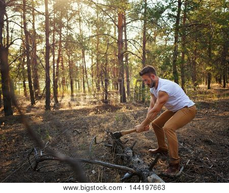 Lumberjack chopping a fallen tree with an ax. Woodcutter in a white T-shirt. Felling trees. Logging. Manual labor.
