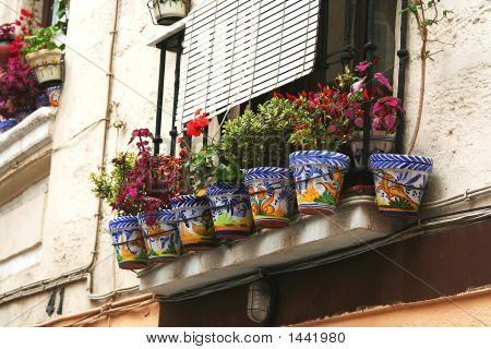 Cadiz  Window Pot Plants