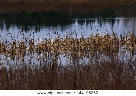 a picture of an exterior Pacific Northwest fresh water pond and reeds in winter