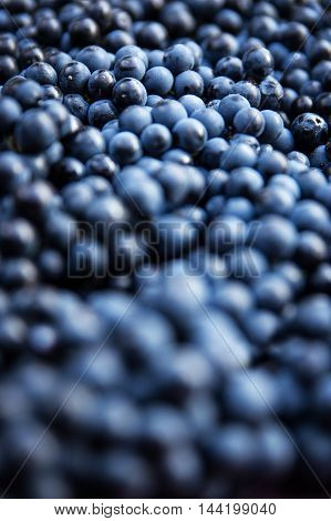 Closeup Of A Lots Of Blue Grape Berries