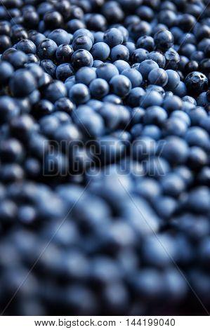 Closeup Of A Lots Of Blue Grape Berries