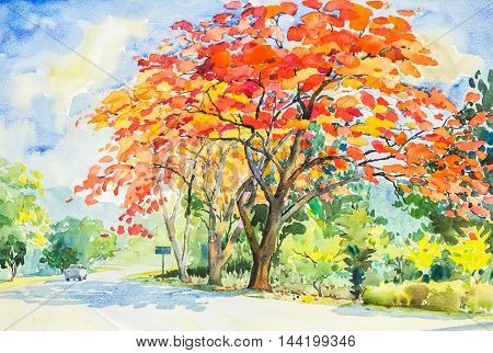watercolor original landscape painting red orange color of peacock flowers tree in sky and cloud background