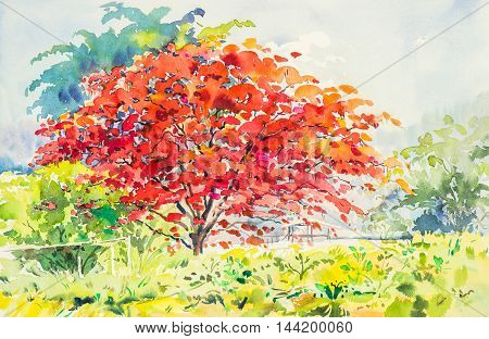 watercolor landscape painting red orange color of peacock flowers tree in sky and cloud background original painting