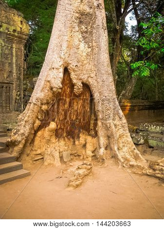 The picture of trees and old temple, Angkor, Cambodia
