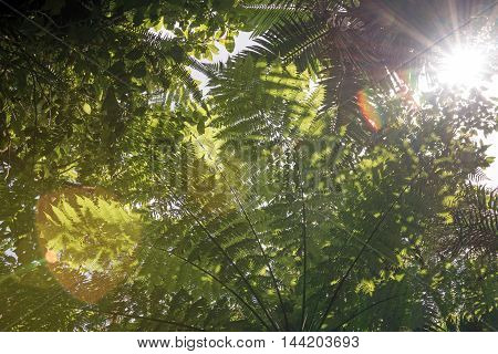 Sun shining through leaves in a rainforest