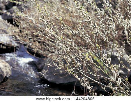 Flower bud on a tree branch