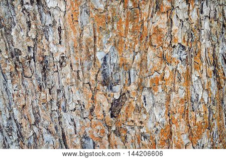Wooden background. Close-up wooden texture of tree bark.