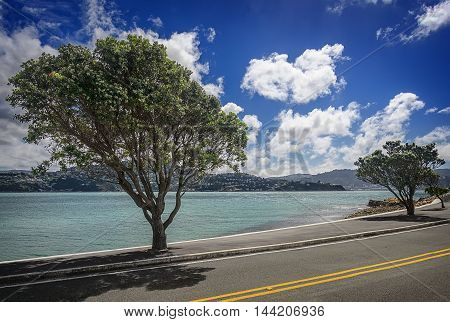 Big beautiful trees along the coast in Wellington at sunny day. New Zealand