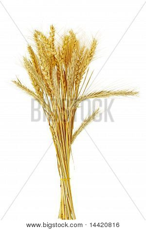 Cereal Grain Bundle