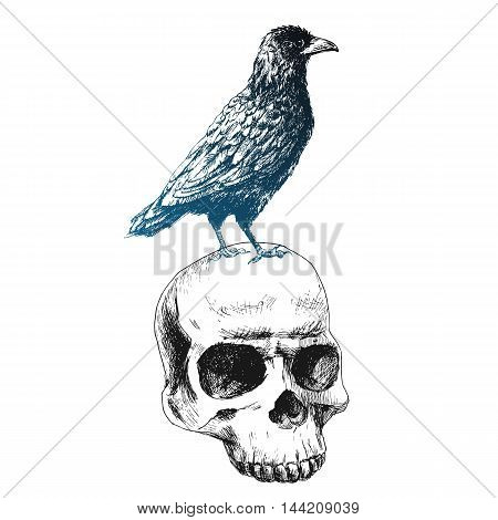 Beautiful vector image with raven on the human skull