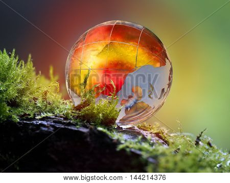 Large glowing golden ball lies on the moss