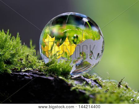 Large clear glass ball lying on the moss. Reflection of an autumn orange maple leaf. Concept - time of the year autumn beauty ecology protection