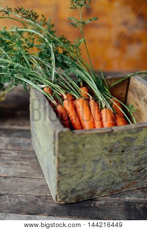 Harvest Carrots On  Dark Wood Table Background. Freshly Picked C