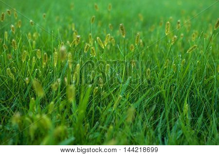 green grass field and bright sky. background.