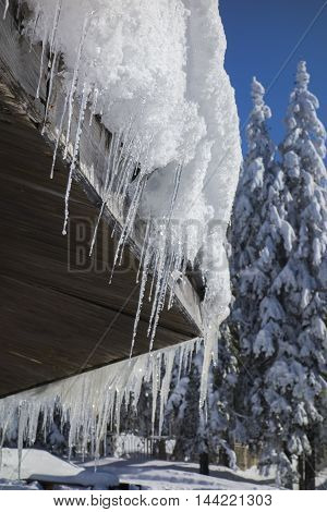 icicles from eaves in January with snowy pines